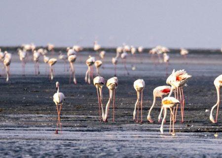 دریاچه ارومیه کویر میشود