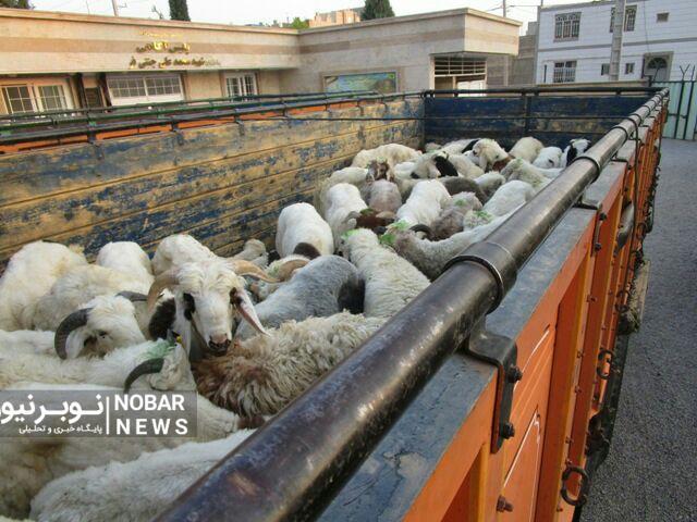 قیمت دام زنده در آستانه عید قربان در آذربایجان شرقی
