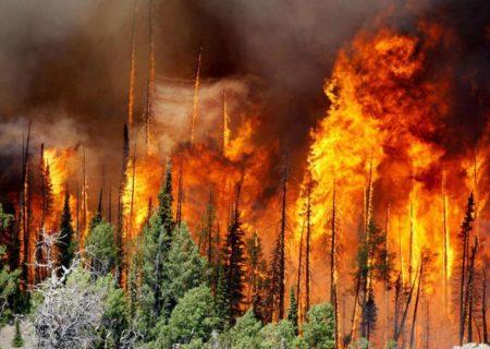 ۹۰ درصد عوامل آتش سوزی در جنگلهای ارسباران، خطای انسانی است